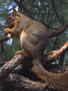 Shiny Squirrel